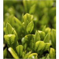 [BIG SALES] Sữa Rửa Mặt Trà Xanh Innisfree Green Tea Cleansing Foam 150ml