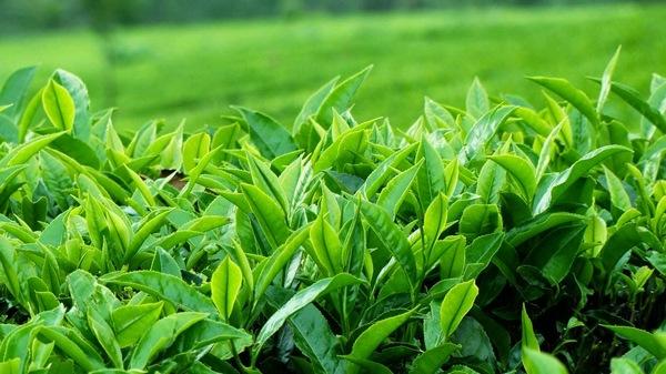 Review Bộ Dưỡng Trà Xanh Innisfree Green Tea Fresh