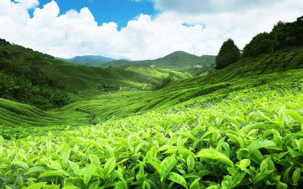 Phương pháp điều trị mụn ẩn thứ nhất lăn đá trà xanh