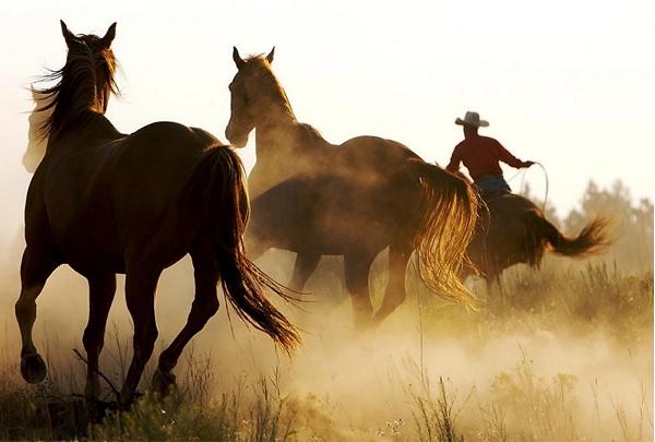 Thành phần Kem Mỡ Ngựa Chống Nhăn Da Deoproce Bio Anti Wrinkle Horse Oil Cream 100g