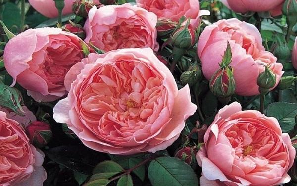 Gel Rửa Tay Khô Kháng Khuẩn Hương Nước Hoa DR. CHARME Flower 100ml