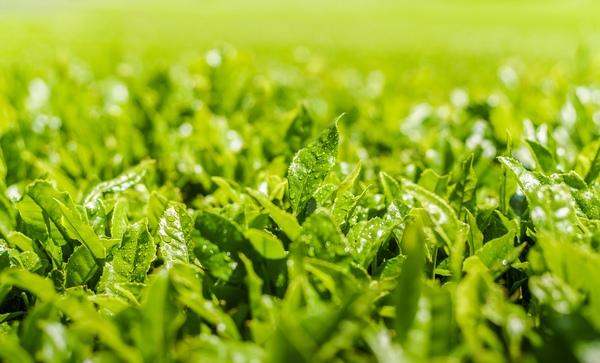 Thành phần Tinh chất dưỡng da chiết xuất trà xanh Innisfree Green Tea Seed Serum 30ml