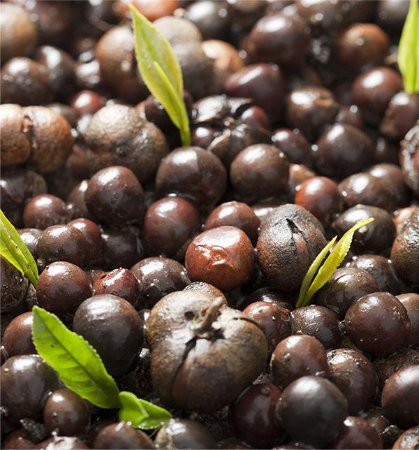Tea Seed