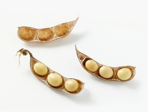 Kem Dưỡng Sáng Da, Chống Lão Hóa Innisfree Soybean Energy Cream 2