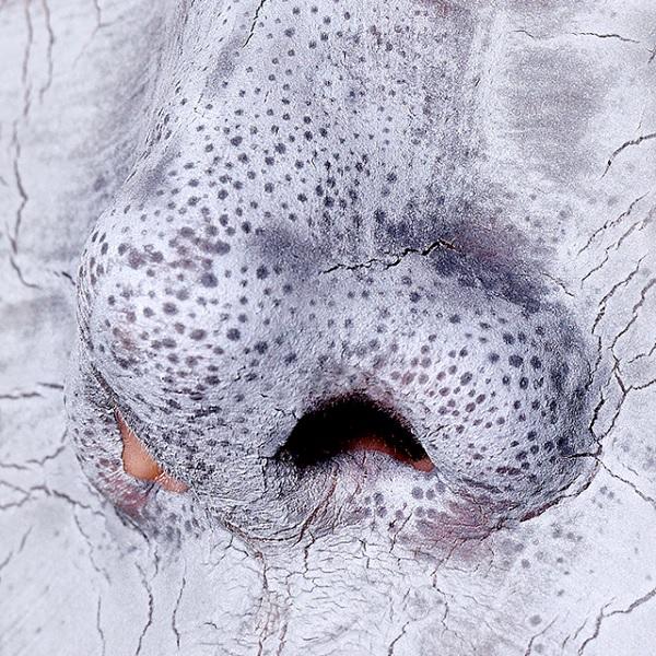 Chức năng Laneige Mini Pore Waterclay Mask 15ml