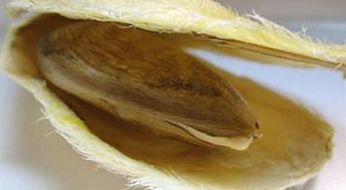 Sữa Dưỡng Chiết Xuất Từ Hạt Xoài The Face Shop Mago Seed Advanced Moisturizing Lotion 145ml